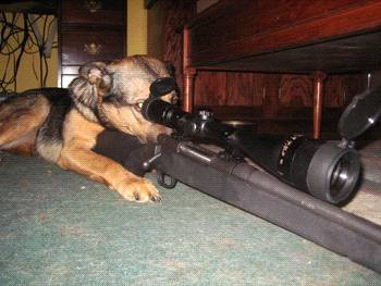 Real guard dogs